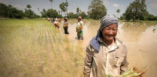 Cambodia, agriculture, rice, exports