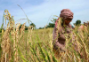 ADB Project To Bolster Agriculture Industry