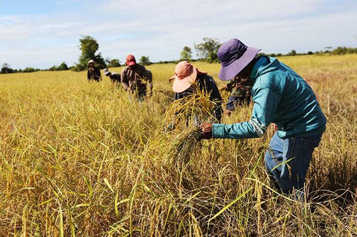 Cambodia Agri-Exports 2020