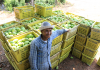 CAMBODIA HARVEST II: Request for Applications from Businesses - Testing Innovations in the Vegetable Sub-Sector