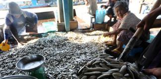 Cambodia Fisheries