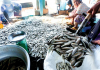EU Launches $124m Project To Boost Fisheries Sector