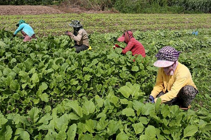 Organic certification in Cambodia